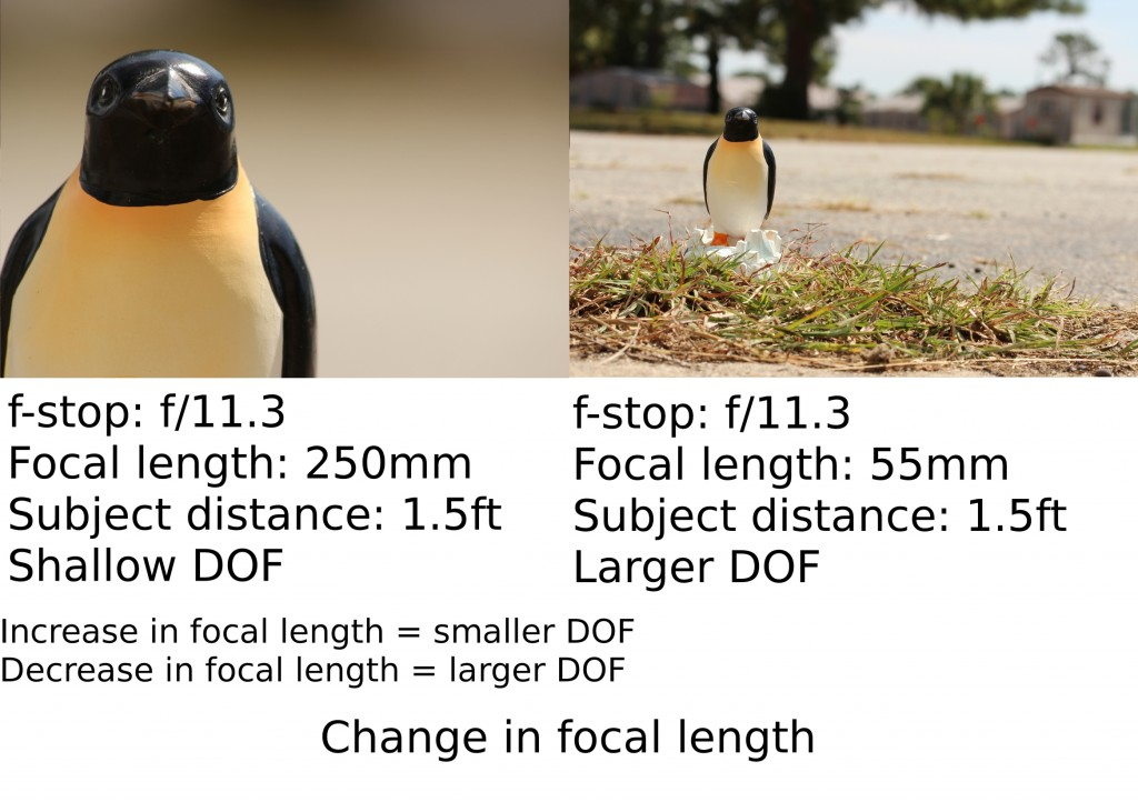 Penguin poses for focal length experiment