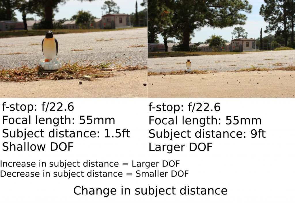 Penguin poses for subject distance experiment